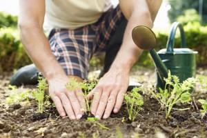 potager-arrosoir-homme-plante-jardin-main-10570161