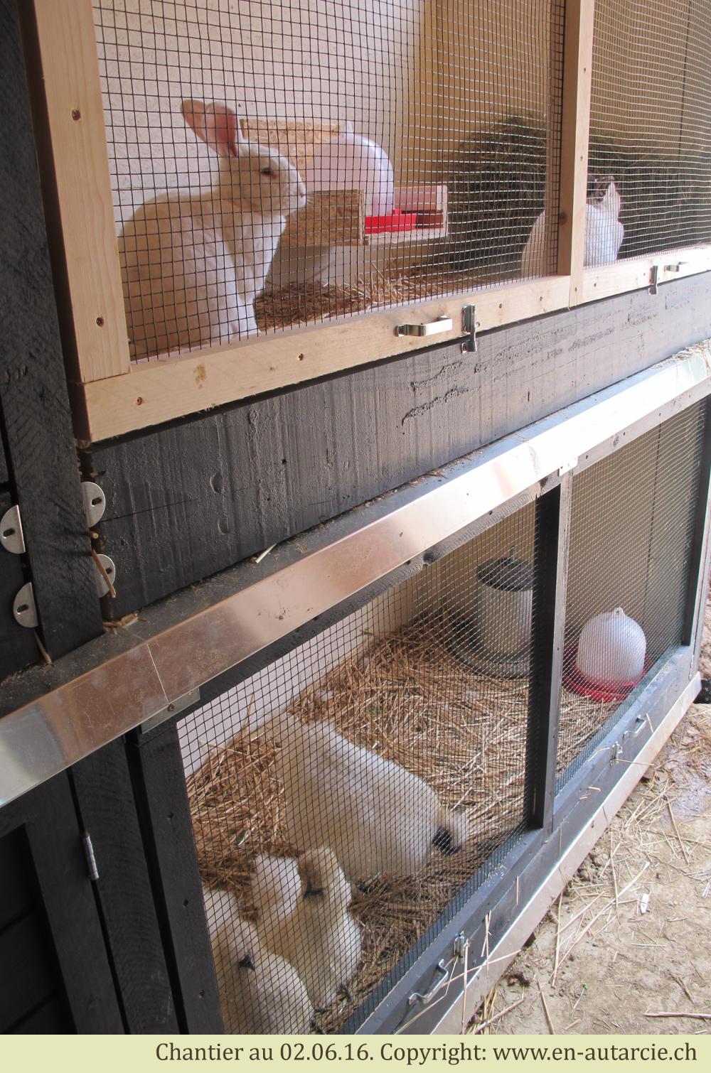 03.06.16 Arrivée des animaux utiles au jardin dans leur nouveau clapier sur mesure. De gauche à droite: Angelo, Maya, Pompon 1, Pompon 2, Pompon 3 et Tac.