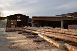 Troncs de bois venant d'arriver des forêts de la région à la scierie Tornare Alexandre & fils