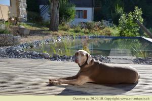 20.08.18 Le chien se prélasse devant la piscine terminée
